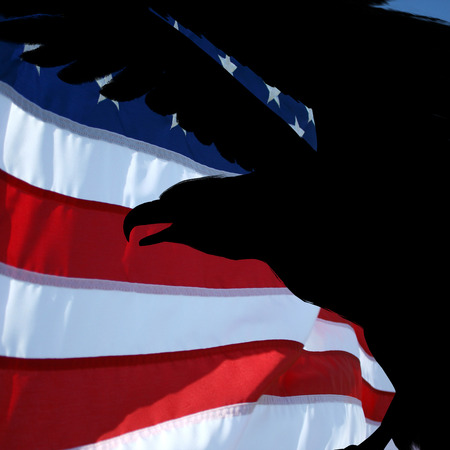 profil: usa flag and silhouette eagle profil. Stock Photo
