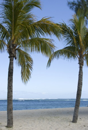 A view of beach and ocean and palm trees Stock Photo - 1463697