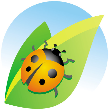 Ladybug on a green leaf Vector