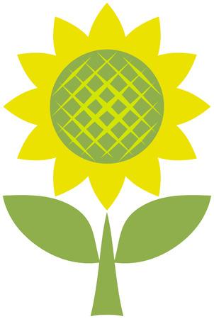 Sunflower – vector illustration Vector