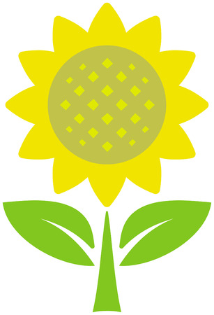 Sunflower - vector illustration Vector