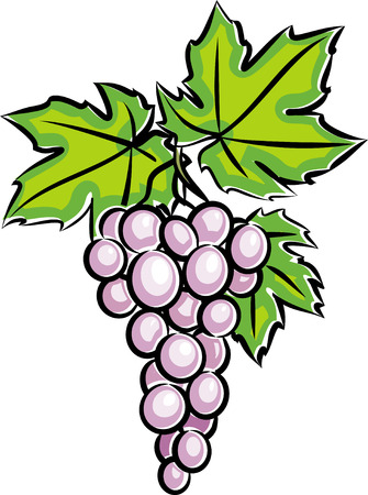 vine leaf: Grapes (Vector)