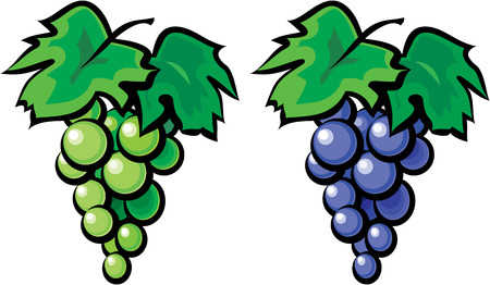 Grape vine isolated on white background Vector