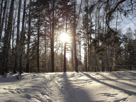 winter path in forest