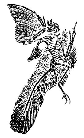 archaeopteryx, conception - may mean something very ancient