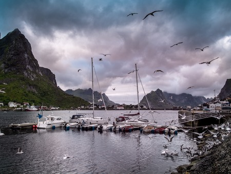 fishing village: Seagulls flying over boat near moorage in Reine village, Norway Stock Photo