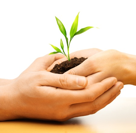 Human hands holding earth with plant sprout  photo