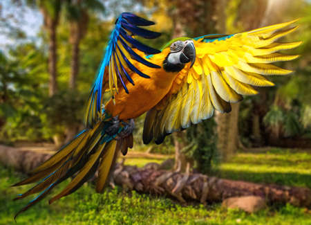 blue parrot: Beautiful colourful parrot over tropical background  Stock Photo