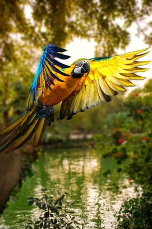 caribbean climate: Beautiful colourful parrot over tropical background  Stock Photo
