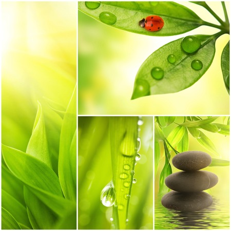 Fresh spring green grass collage  photo