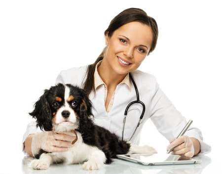 pet care: Young positive brunette veterinary woman with spaniel taking notes on tablet pc