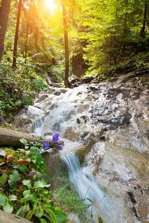 slovak: Fast river in a forest in Slovak Paradise, Slovakia
