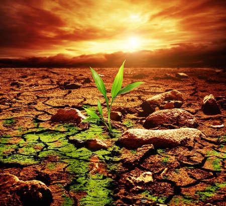 soil pollution: Green plant growing trough dead soil Stock Photo