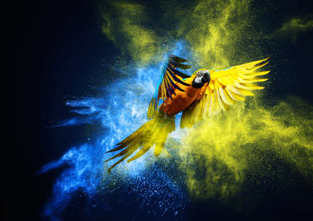 Flying Ara parrot over colourful powder explosion photo