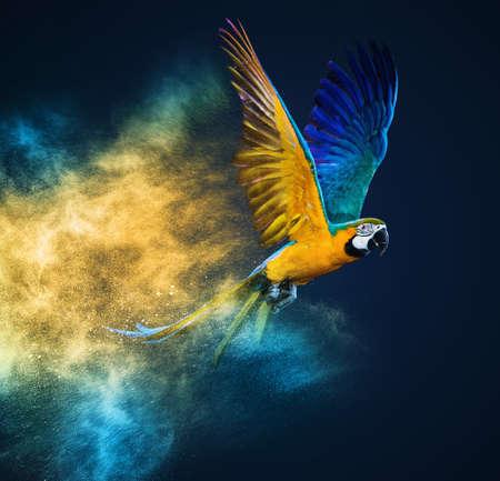 papagayo: Flying loro Ara más colorido explosión de polvo
