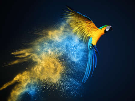 vibrant colours: Flying Ara parrot over colourful powder explosion