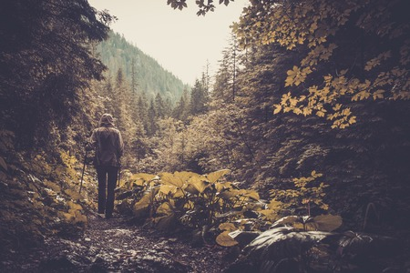 hiking stick: Woman with hiking equipment walking in mountain forest Stock Photo