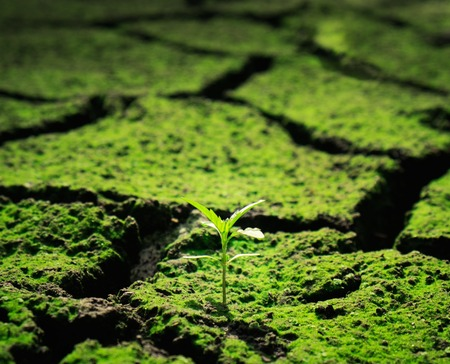 cracked earth: Green plant growing trough dead soil Stock Photo