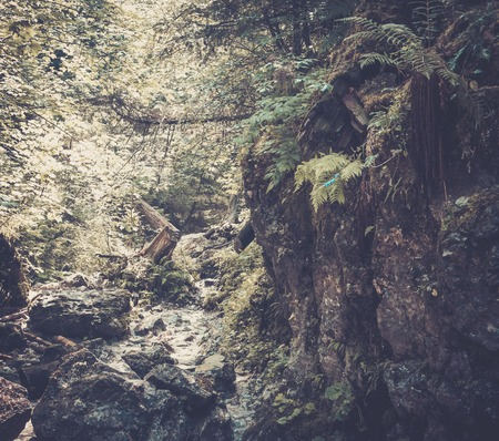 Stream in a mountain forest photo