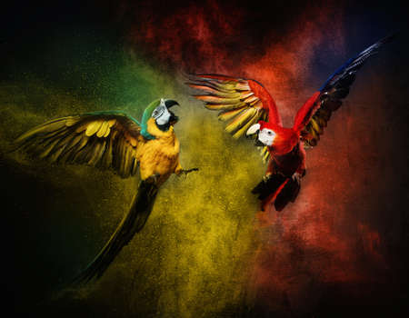 Two parrots fighting against colourful powder explosion photo