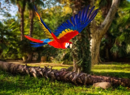 parrot flying: Colourful flying parrot in tropical landscape