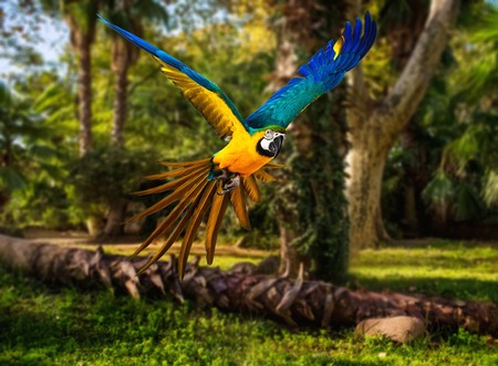 Colourful flying parrot in tropical landscape photo