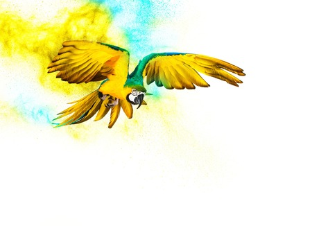 Colourful flying parrot isolated on white photo