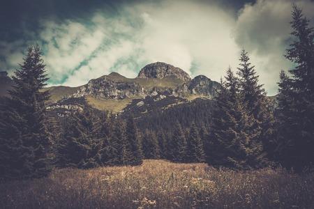 tatras: Mountain among beautiful forest in Tatras Stock Photo