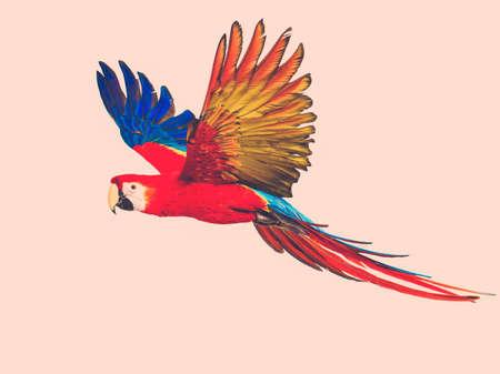 papagayo: Loro volador colorido tonificado