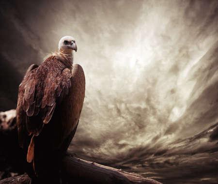 merlin falcon: Eagle sitting on a log against stormy sky