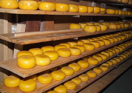 natural process: This is Dutch cheese kebbucks in process of natural aging at classic Dutch farm, Netherlands