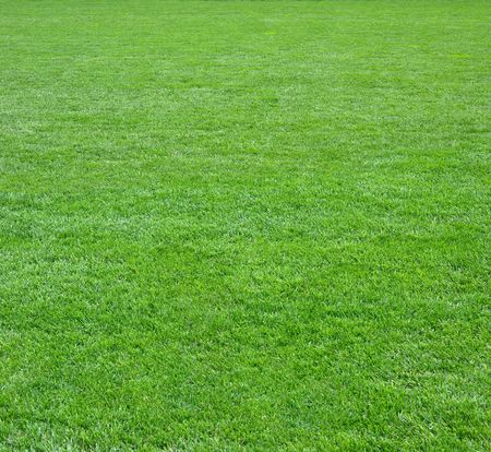 Pure empty green grass field cut square shape