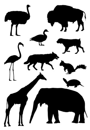 Vector outlines for animals african ostrich, bison, canadian goose, mastiff dog, flamingo, wolf, squirrel, tortoise, giraffe, asian elephant Vector