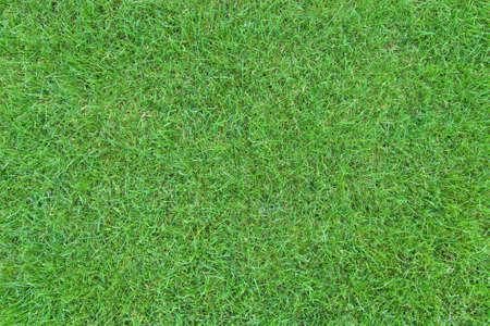 cut grass: Green grass lawn top view
