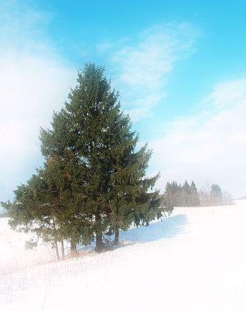 Fir in winter landscape, dream tone Stock Photo