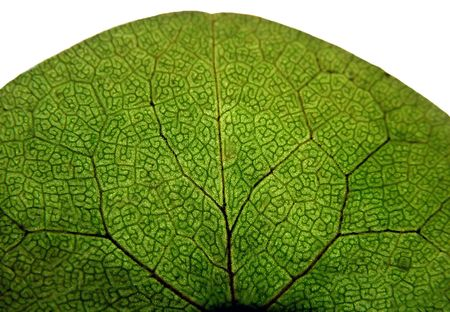 Macro of isolated leaf Stock Photo
