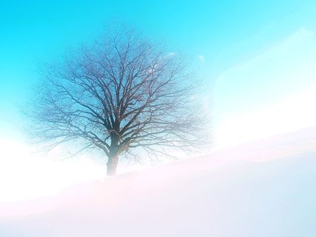twiggy: Tree on hill; winter time; dream tone