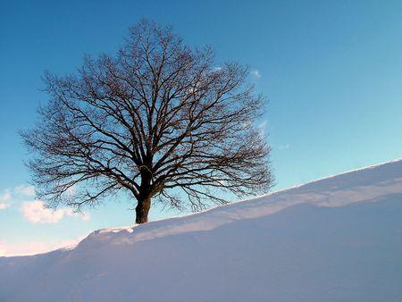 branchy: Tree on hill