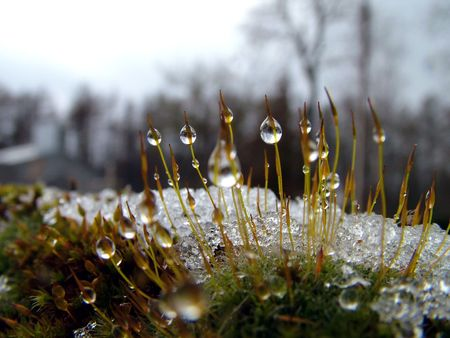 Drop on plants winter time