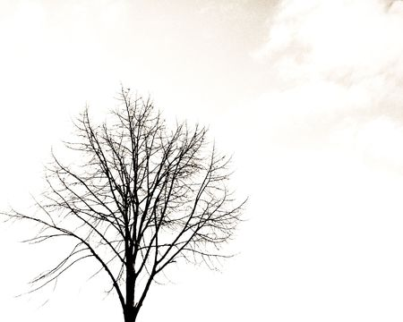 bole: Alone tree Stock Photo