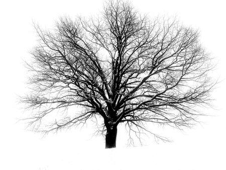 ze: Barnchy tree