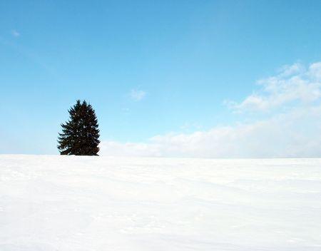 Alone fir tree on hill