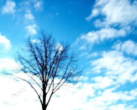 ze: Tree, ambience tone Stock Photo