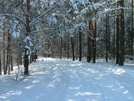 bole: winter way Stock Photo