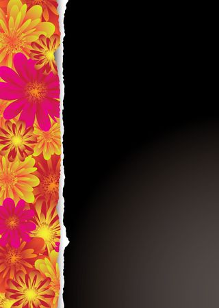 Ideal background in black with pink and red floral border