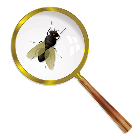 magnified: Fly magnified under a glass with wings and body