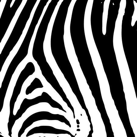 illustrated abstract Zebra black and white print background  Stock Vector - 4861531
