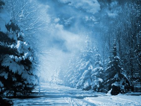 Evergreens at snowy winter park in the night.  Special toned photo fx. Stock Photo