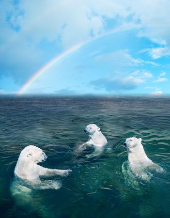 polar: Three polar bears in the dark cold water, rainbow is on the background