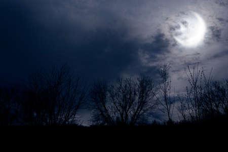 alight: autunno notte foresta scendere con la luna in nuvole luminose
